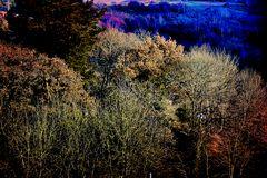 El bosque de colores.