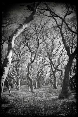 El bosque del misterio