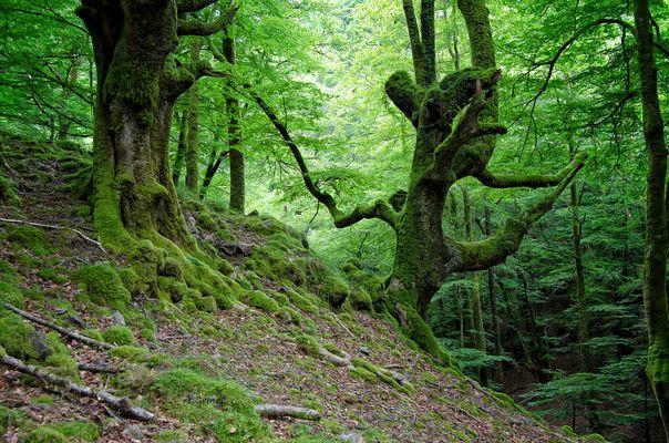 El bosque encantado / 2