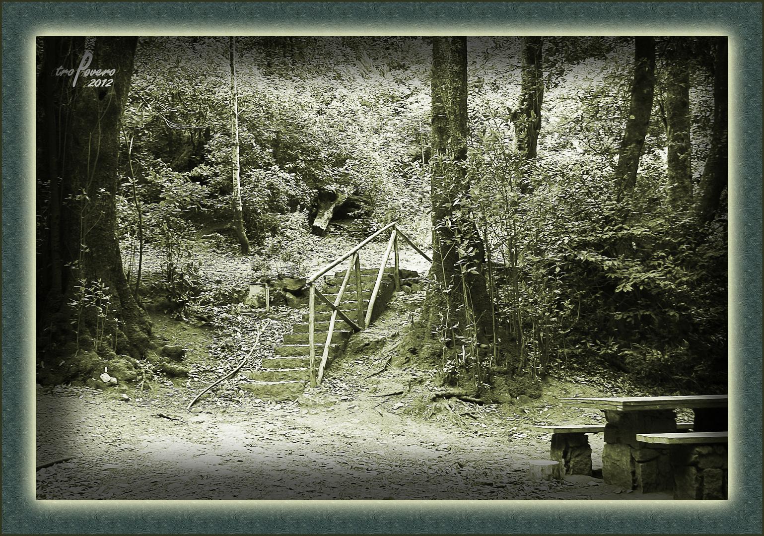 El bosque encantado 2