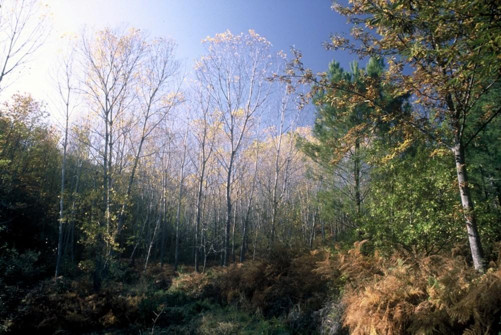 El bosque encantado....