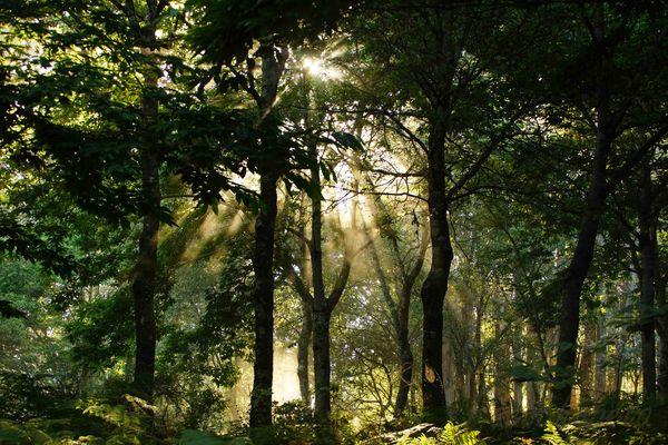 El bosque iluminado