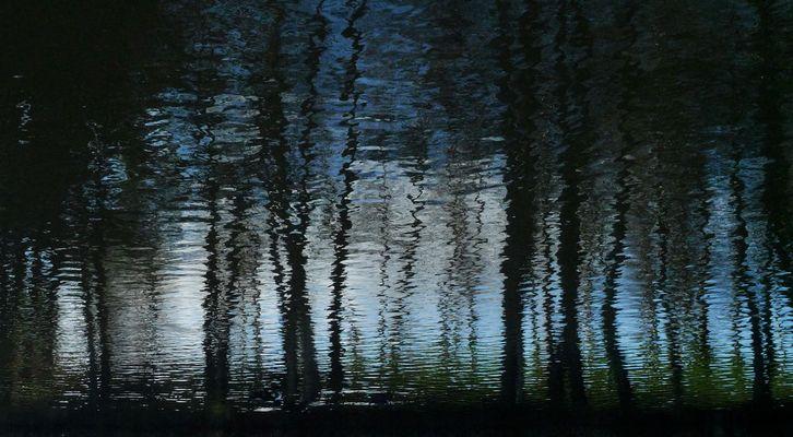El bosque mágico (abstracto).