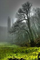 El bosque y la niebla