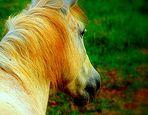 el caballo de mi buen Sebas