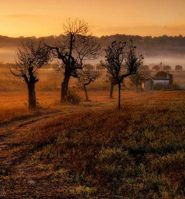 El camino dorado...