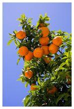 El Cielo lleno de Naranja
