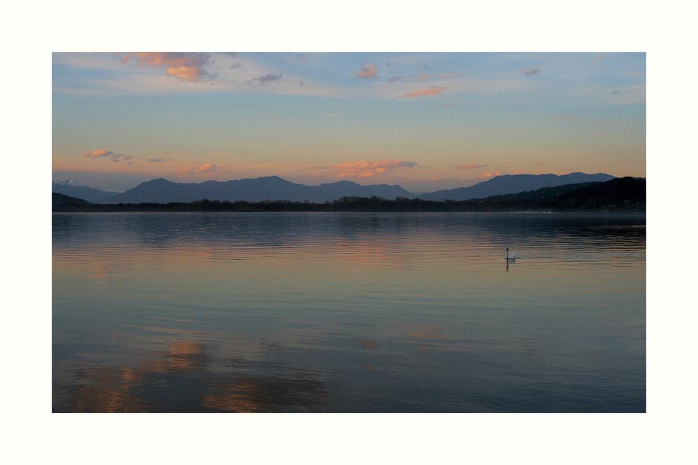 El cisne ... visto y sentido en el Lago Maggiore, Italia