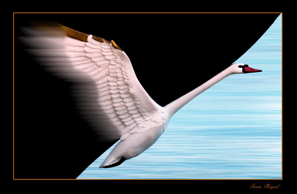 El Cisne Volador