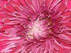 El encanto de la flor!