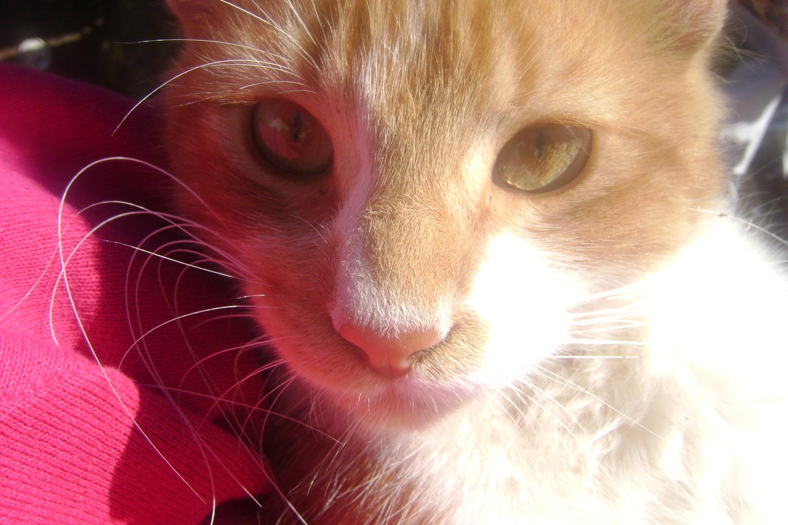 El es Gus :)