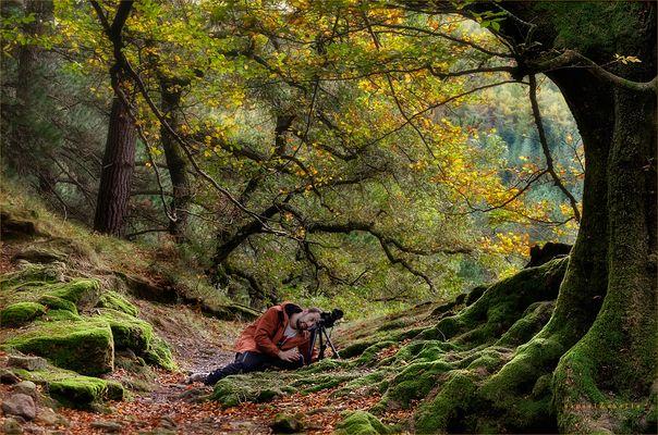 El fotografo y el otoño