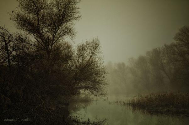 El frágil sonido del silencio.