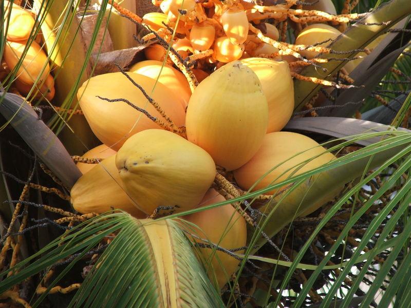 El fruto prohibido