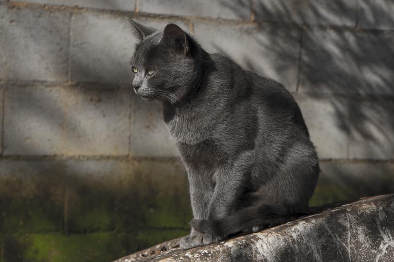 El Gato Al Sol