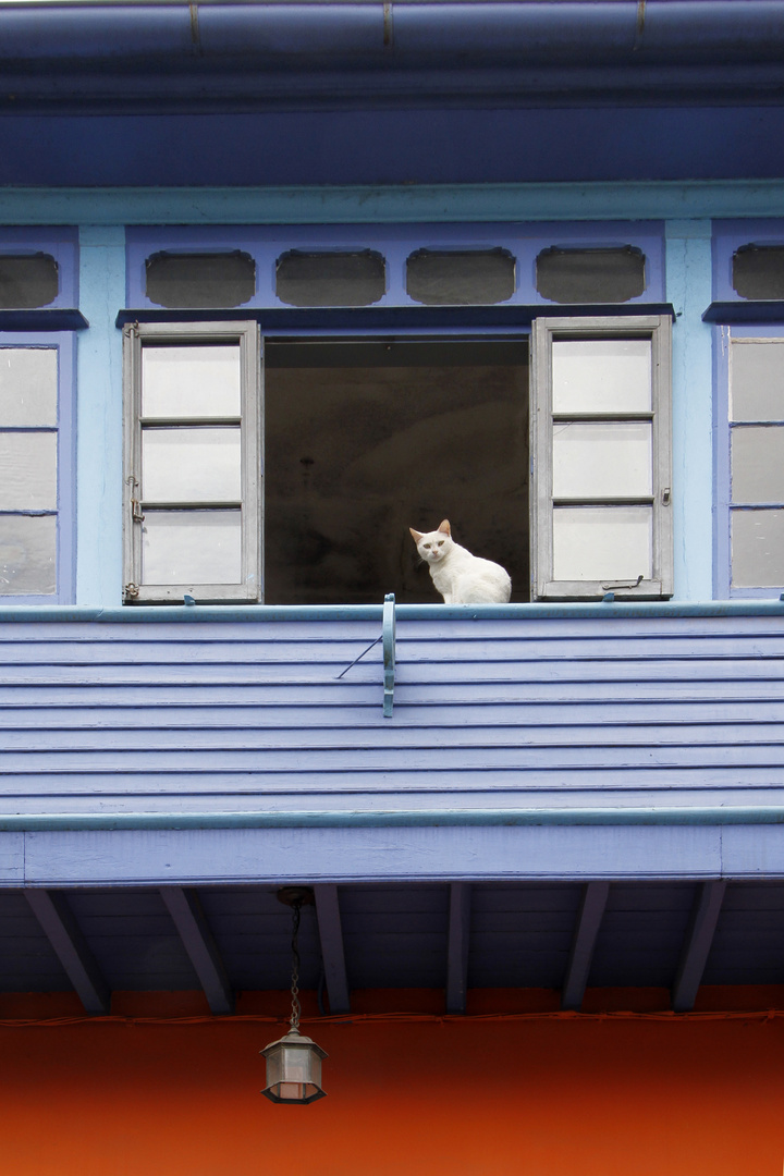 El gato de Cabranes, Asturias