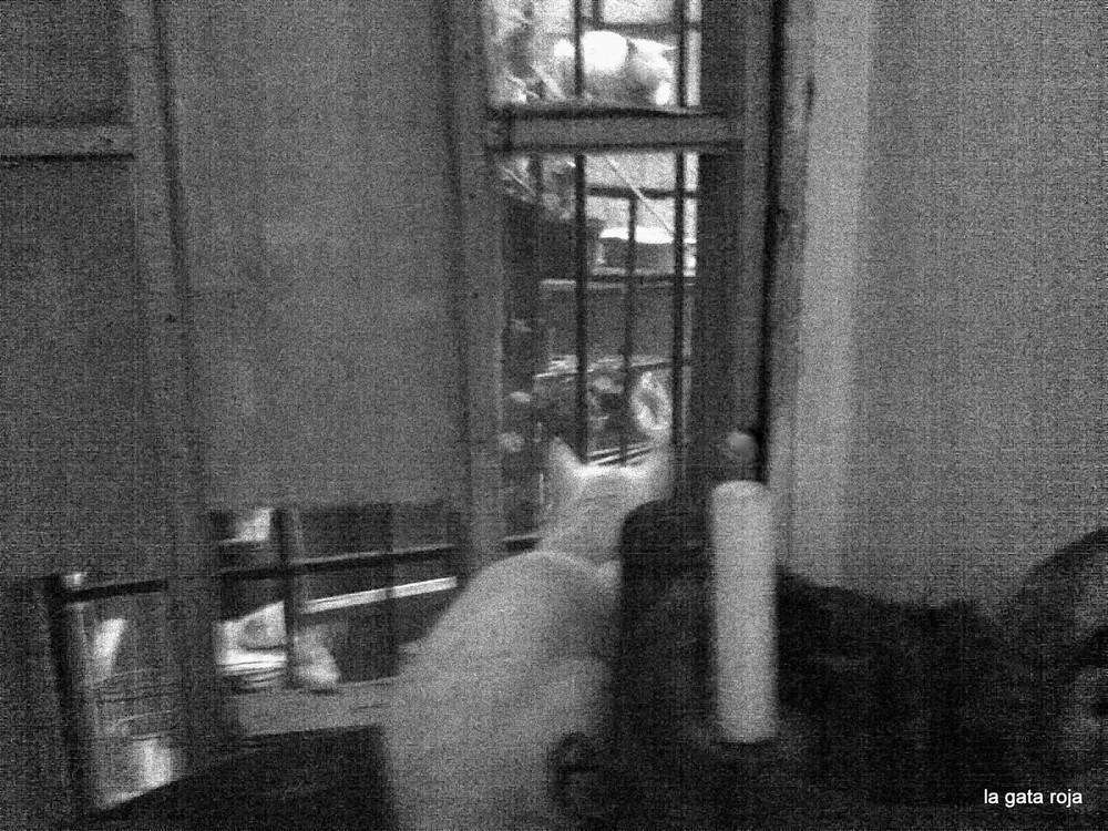 el gato en la ventana