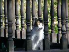 ¡¡¡el gato que está ...tan a gusto!!!