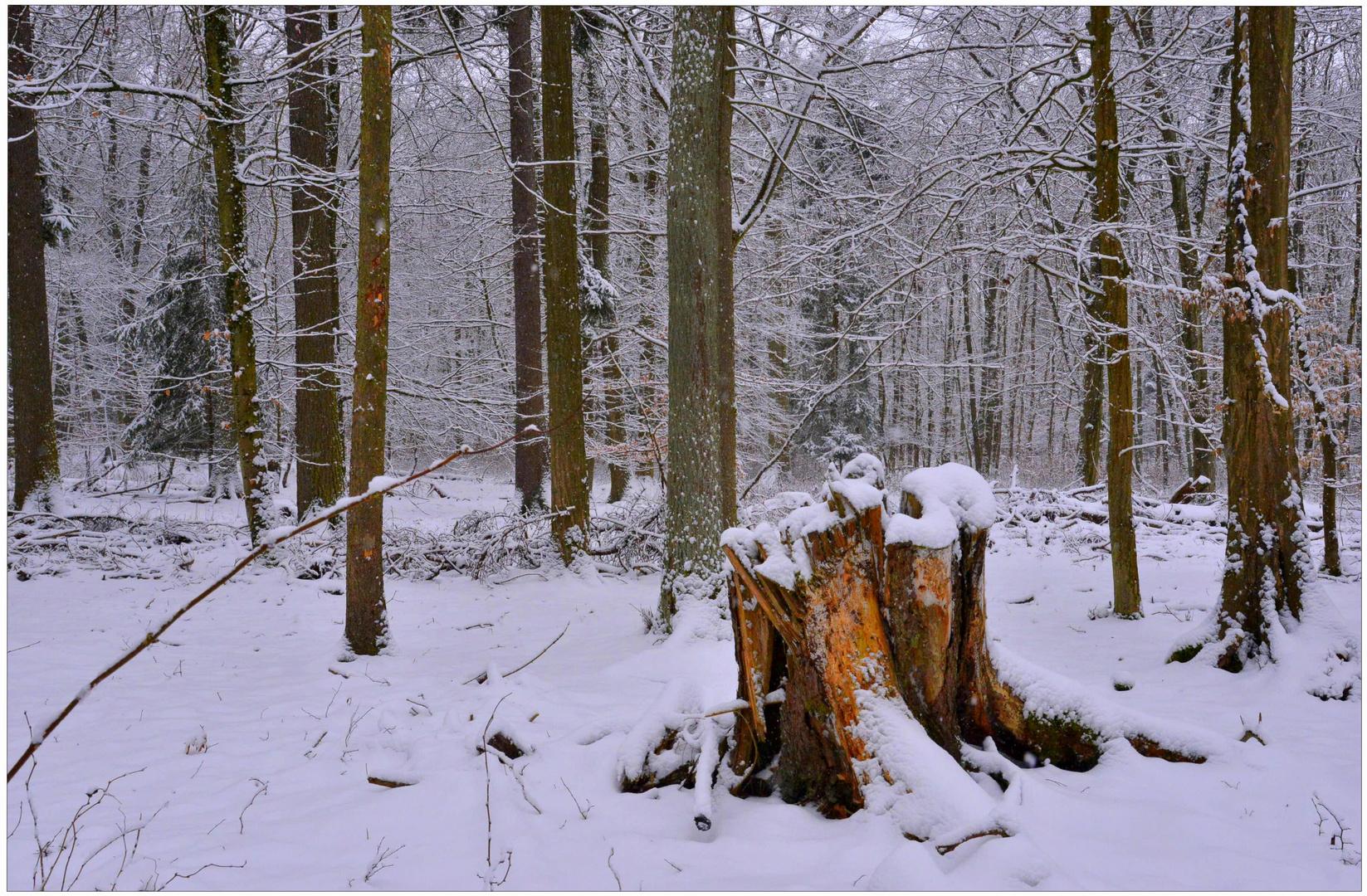 el invierno ha vuelto (der Winter ist zurückgekommen)