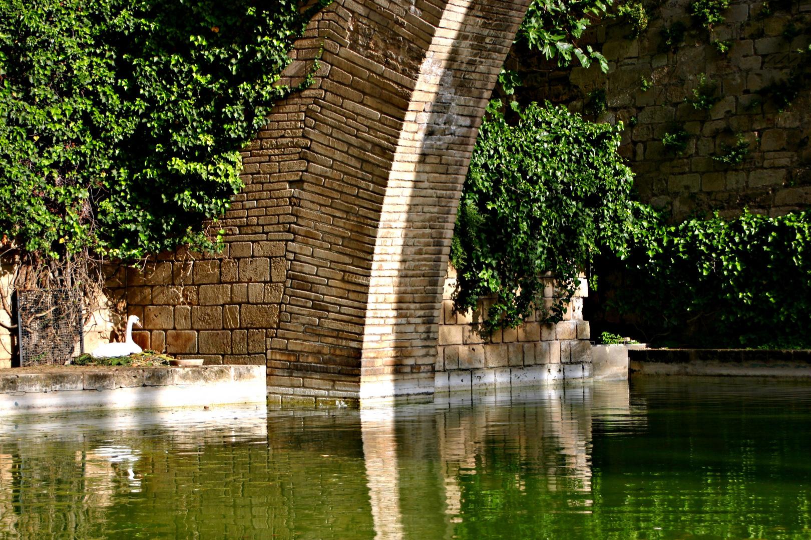 el lago de los cisnes(palma de mallorca)