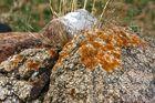 el musgo se instalo en la piedra