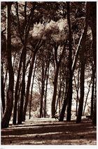 el nen i el bosc