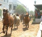 El oeste en Almonte (Huelva)