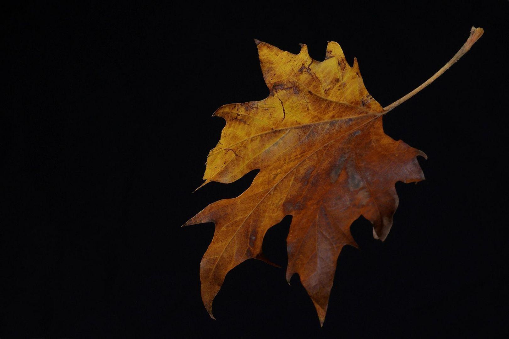 ¡El otoño llega a su fin!