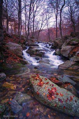 el otoño se va -the autumn is going-