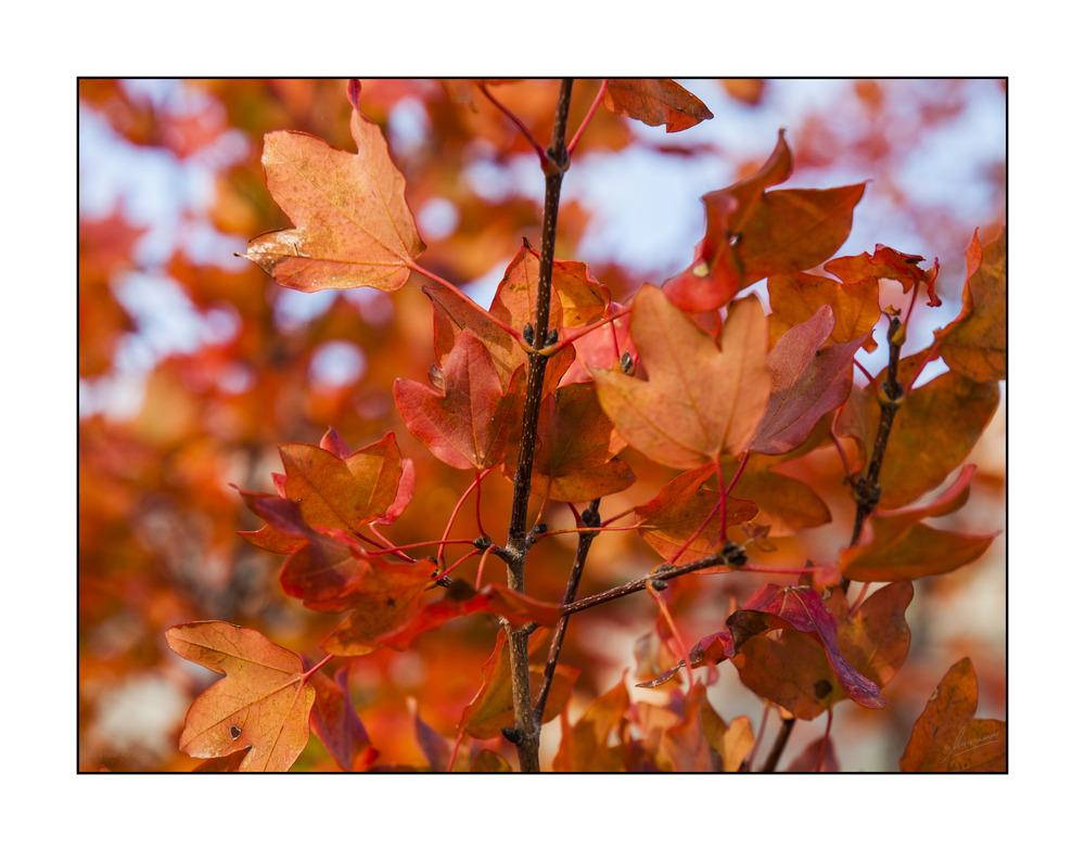 El otoño ya esta aquí