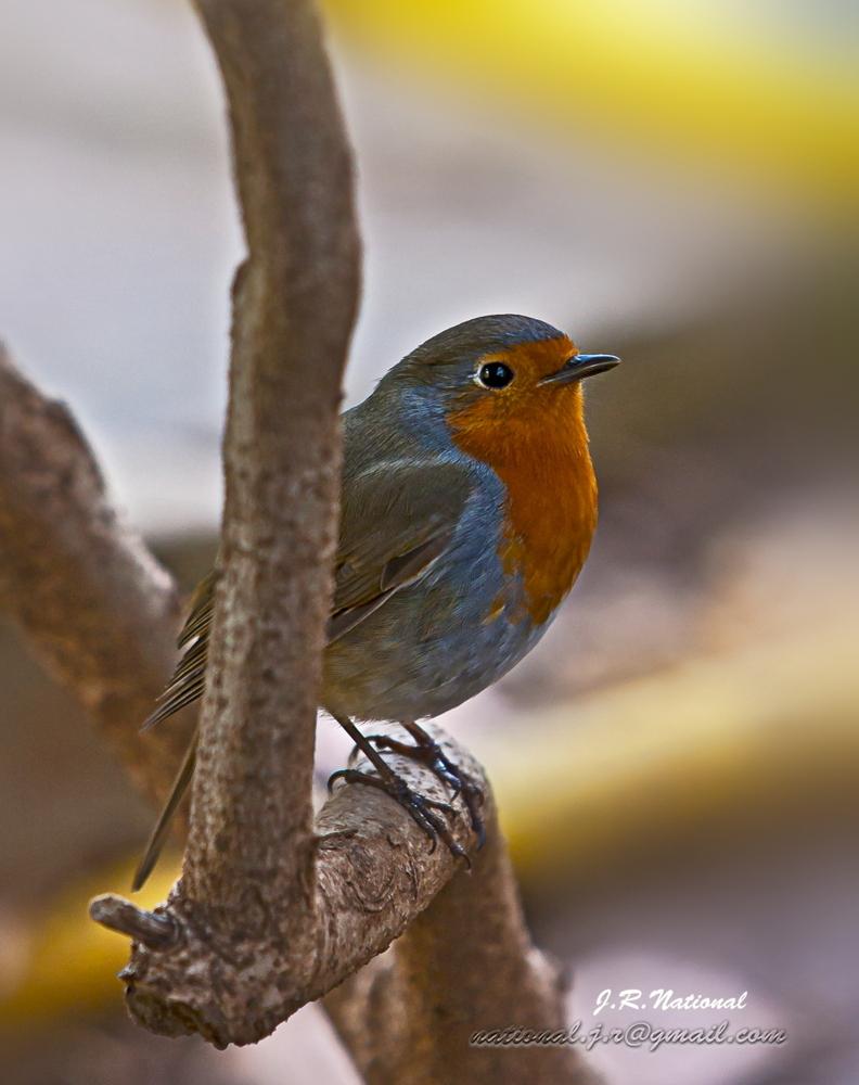 El otro Robin