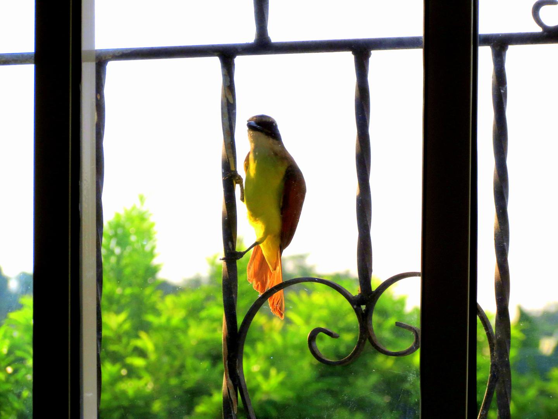 El Pájaro Despertador