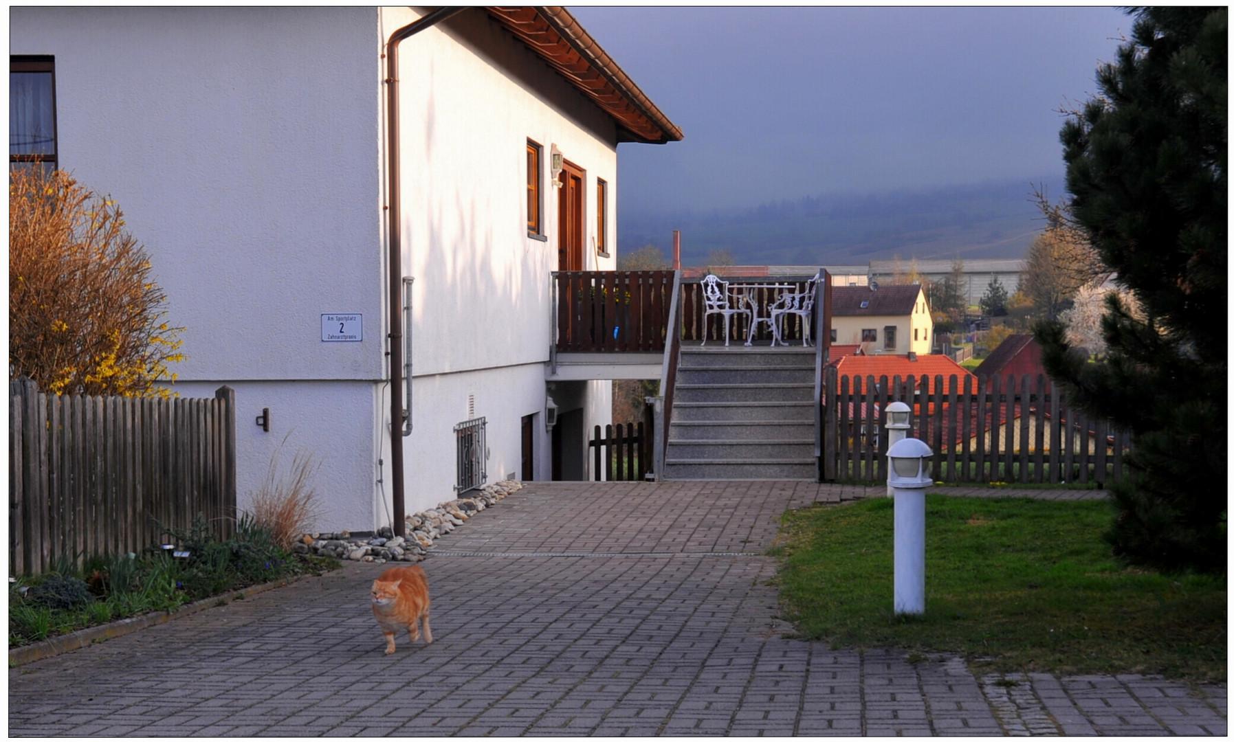 el paseo de la madrugada empieza (Morgenspaziergang)