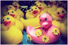 El patito rosa y sus complices