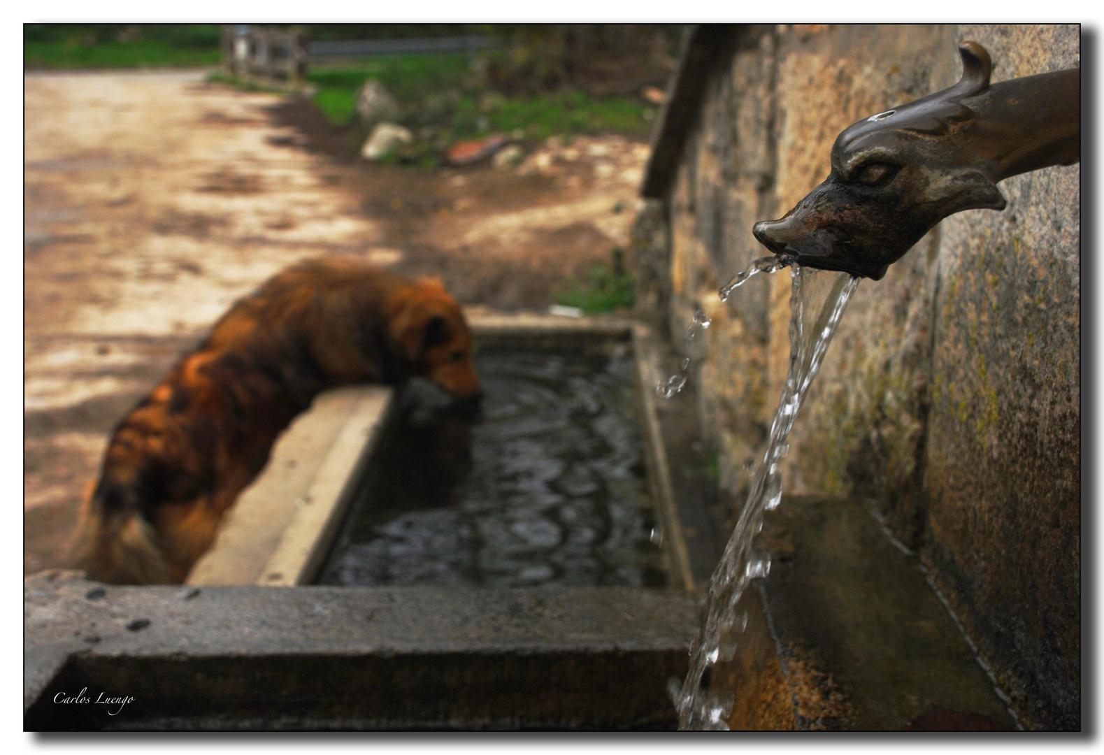 El pato que da de beber al perro