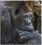 El pensador del Zoo.