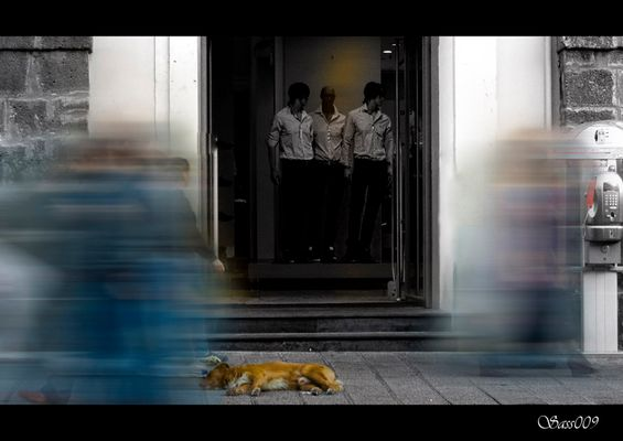 El perro invisible