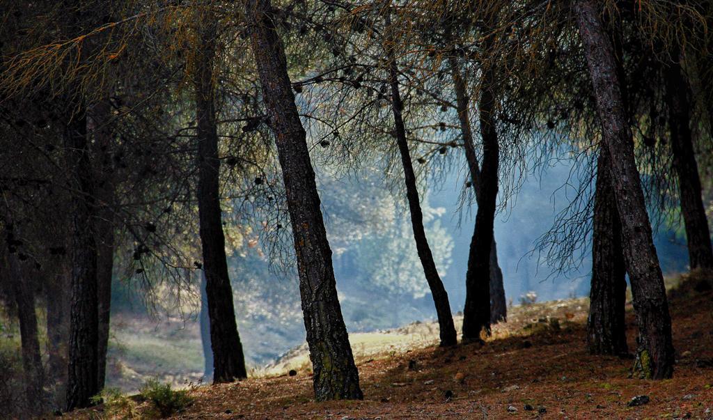 El pinar protector