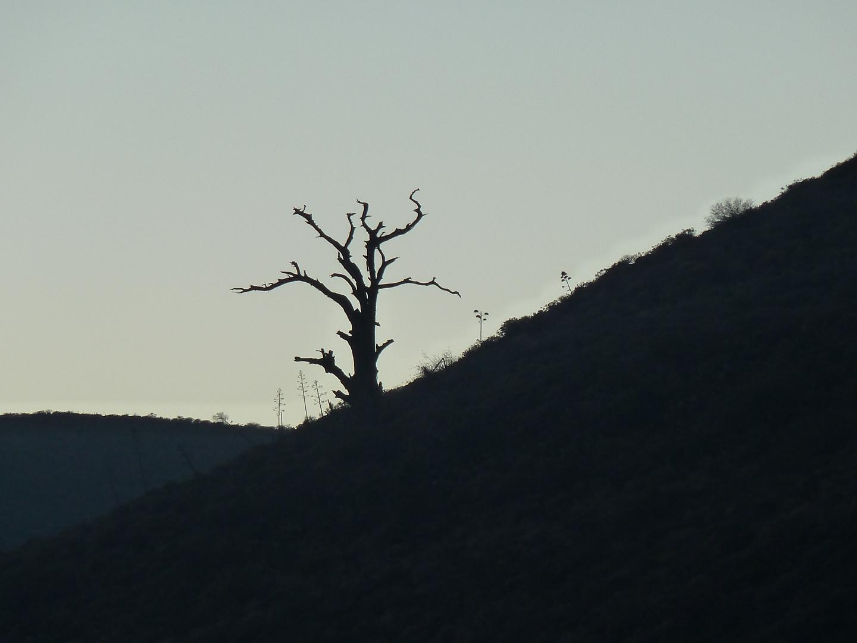 el pinillo