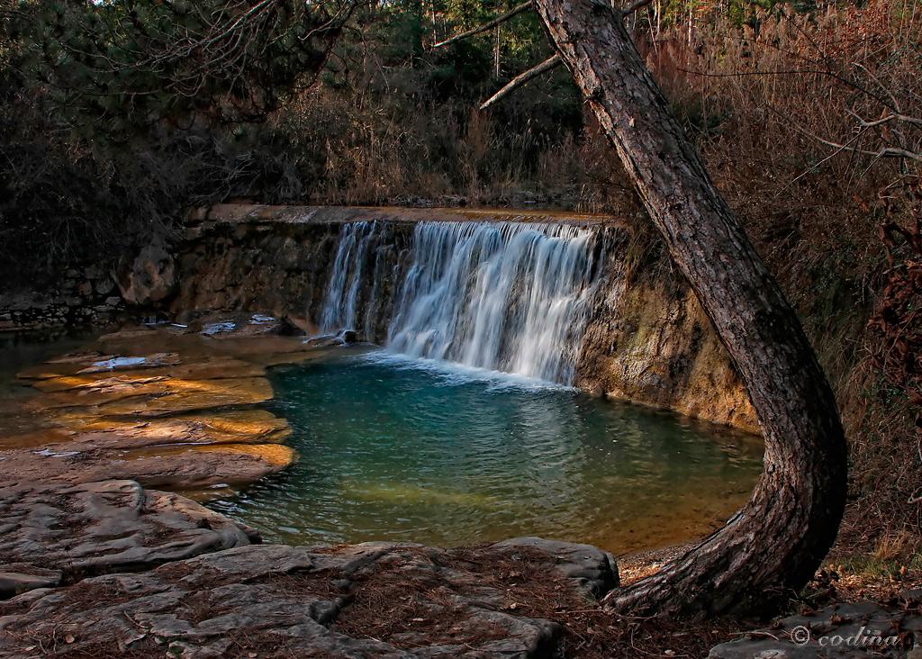 El pino y el agua