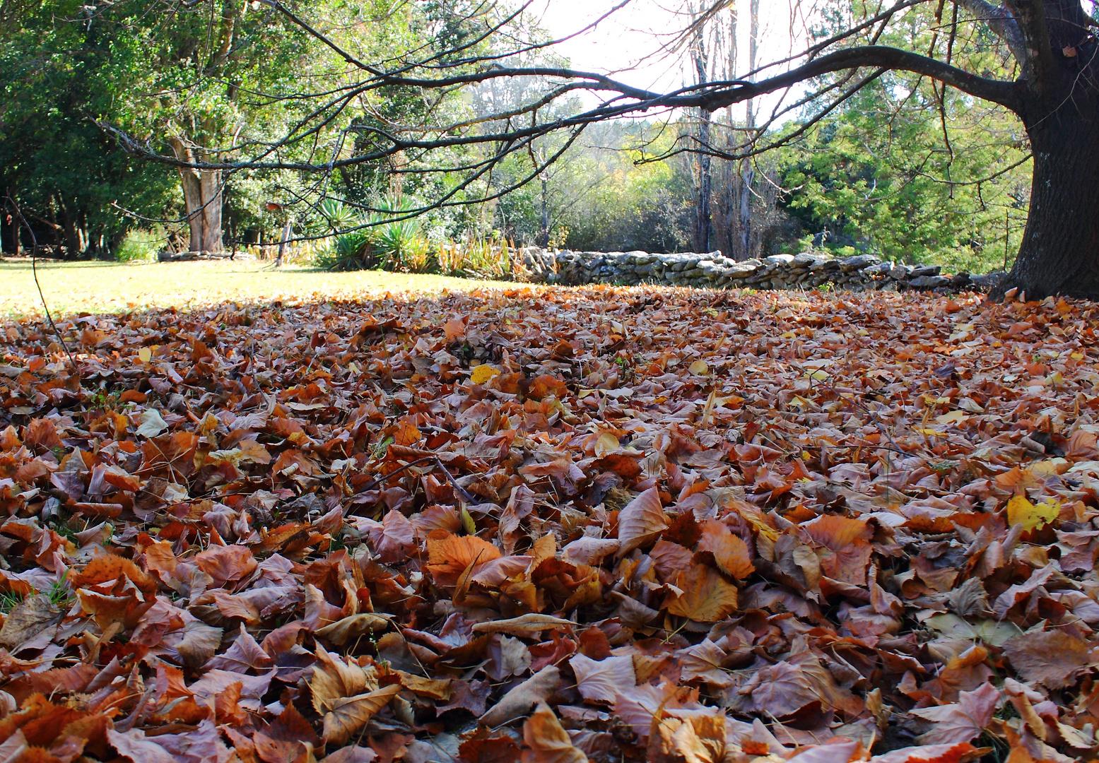 El placer de caminar sobre las hojas de otoño
