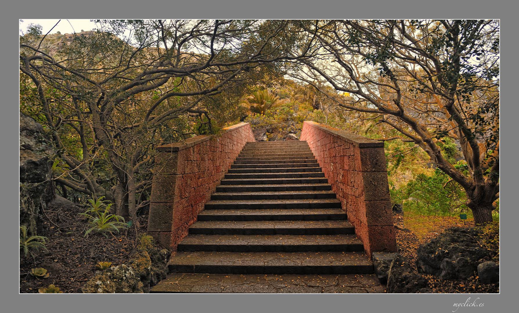 El puente de piedra jardin canario las palmas de g c for El jardin canario