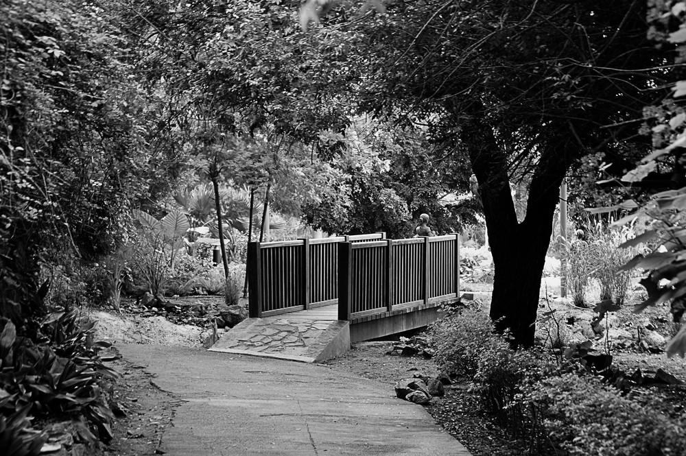 el puente del bosque