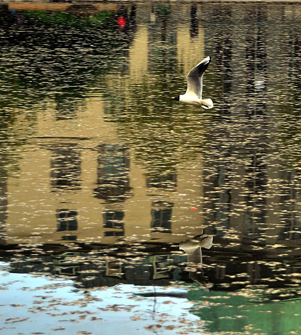 El reflejo en el agua