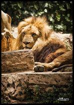 El Rey.....
