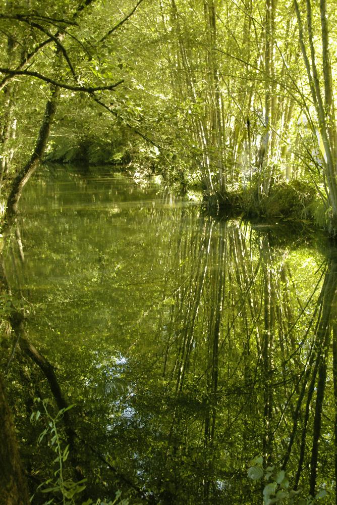 El rio al atardecer