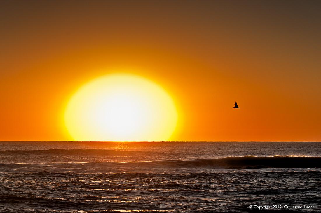 El sol, el mar y la gaviota