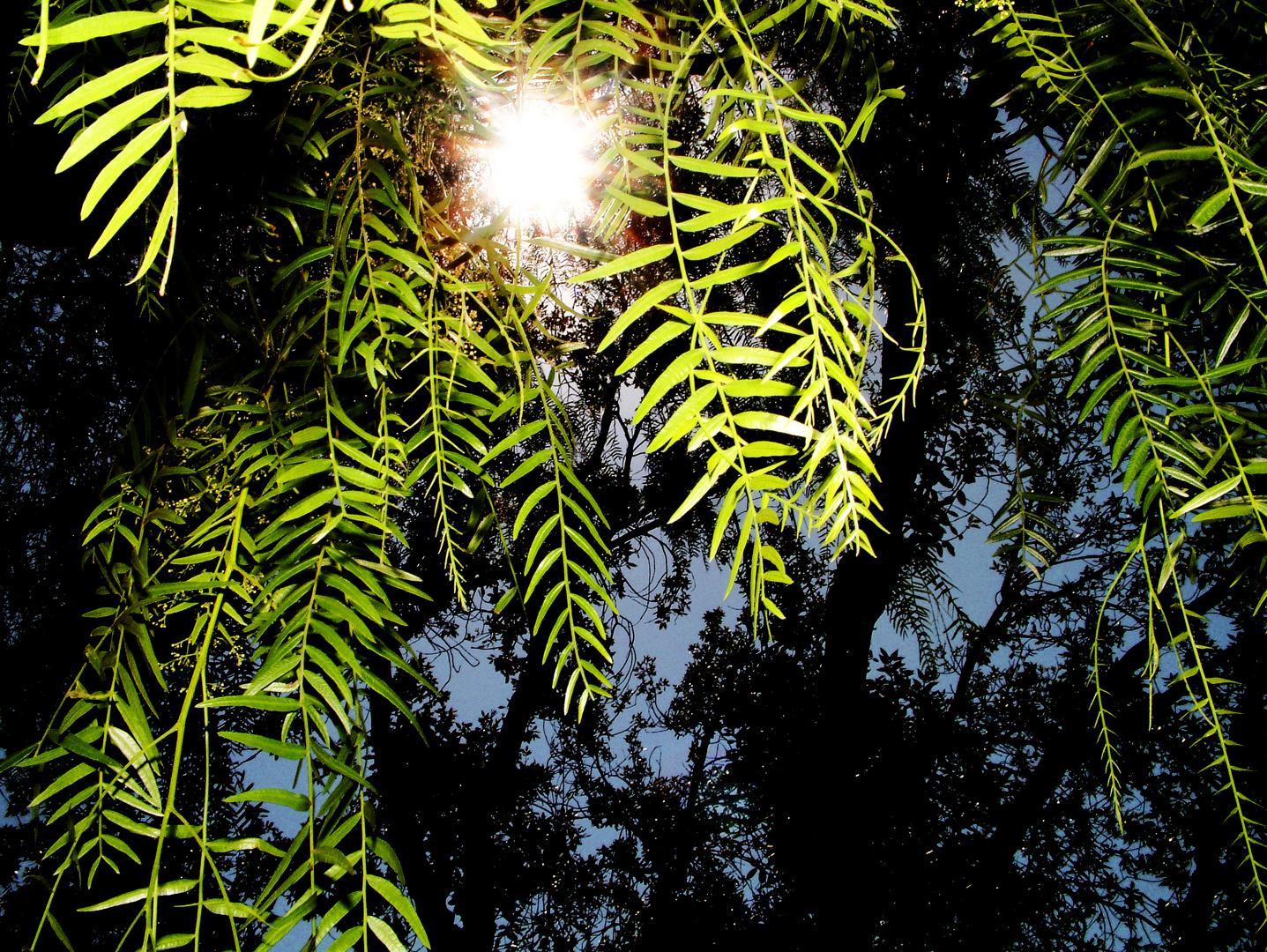 El sol se cuela entre las hojas