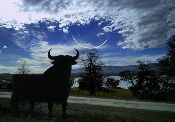 """""""El toro enamorado de la Luna"""""""