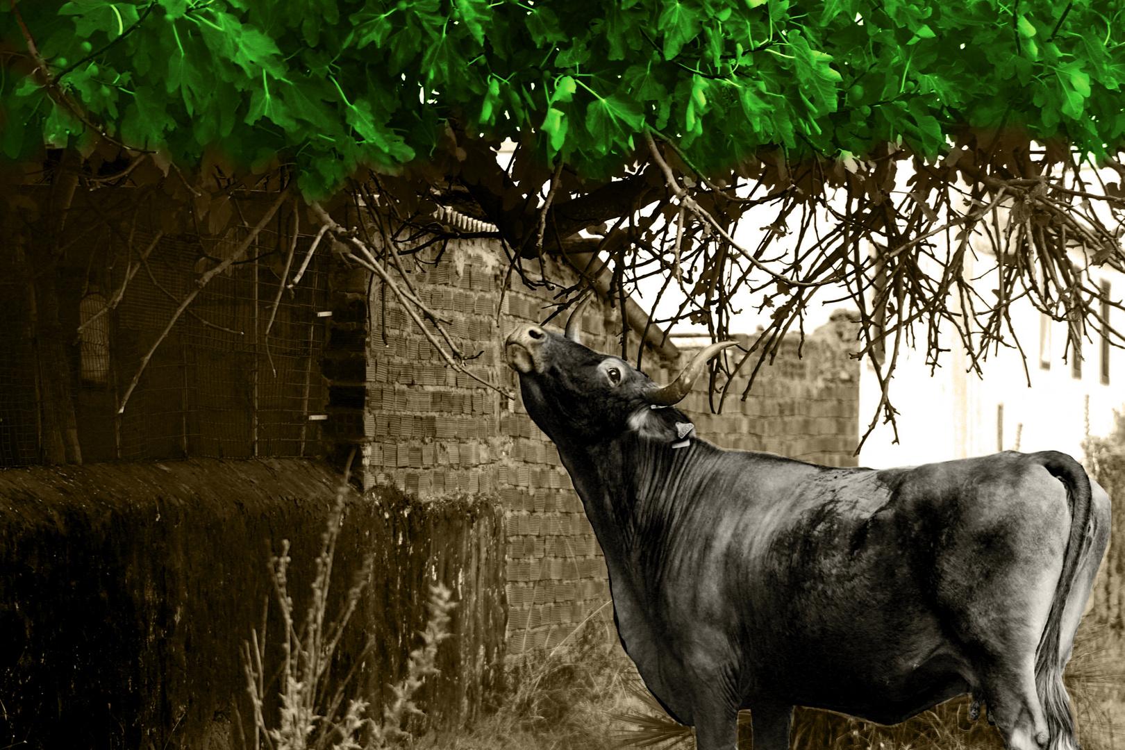 el toro español